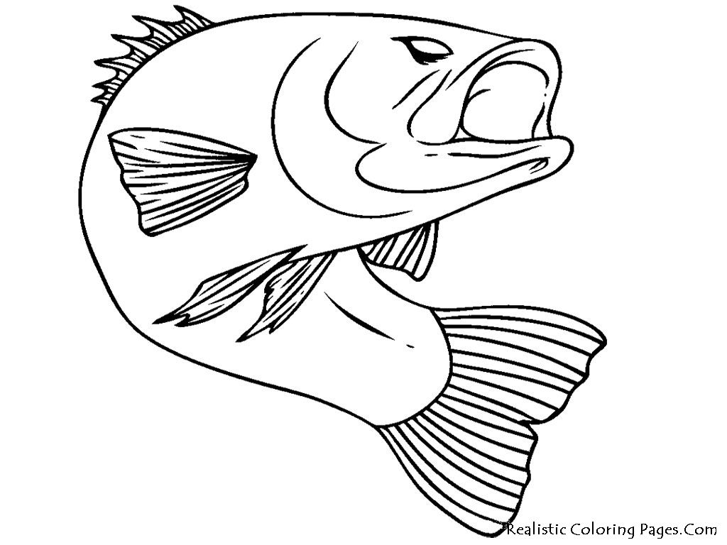Free coloring pages realistic animals - Bass Fish Realistic Coloring Pages