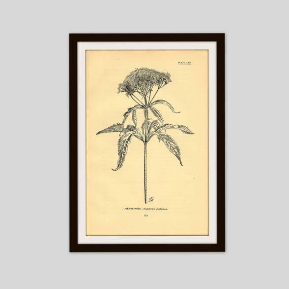 Antique Flower Print, 5\