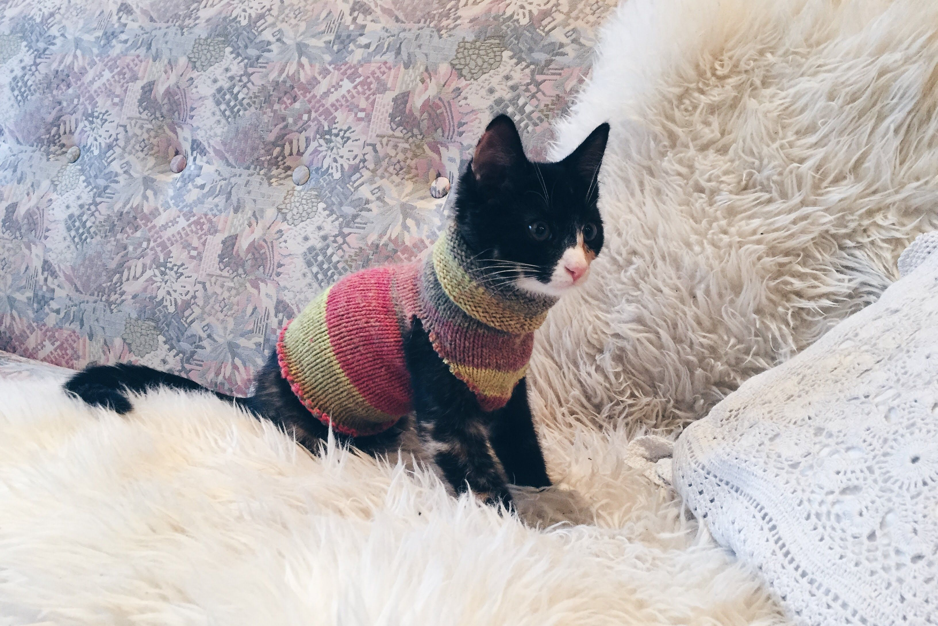Diy How To Make A Kitten Sweater With Only A Sock After Being Outside For A Couple Of Days With Our Kitten Em Cat Sweater Pets Cat Clothes Kitten Clothes
