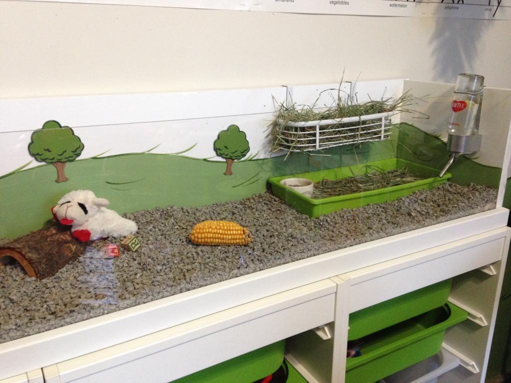 vary guinea pig supplies gravity bin pet bracket colors dp com with feeder amazon kaytee