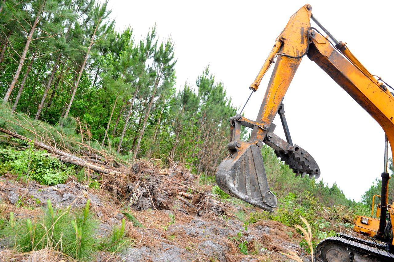 Land_clearing services ensure the removal of trees and