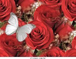 Resultado de imagem para imagem de borboletas para facebook