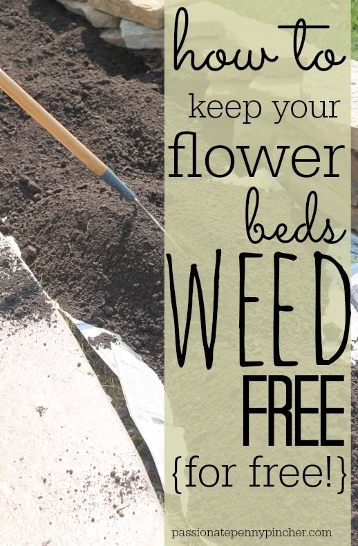 How to Keep Your Flower Beds Weed-Free (for free!) | Money Saving Mom® #flowerbeds
