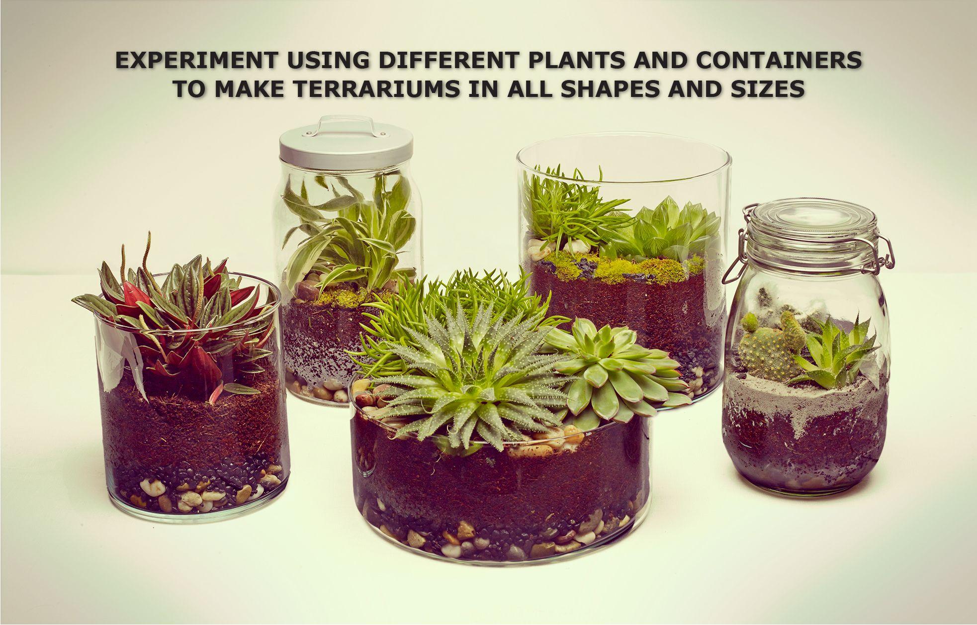 Succulent Plant Pots Online India