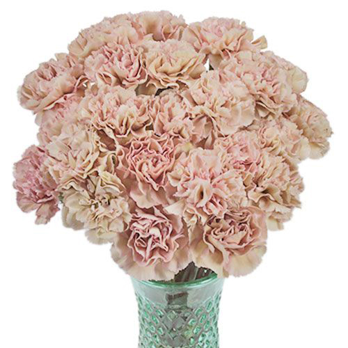 Allergic To Flowers Try These 10 Hypoallergenic Flowers In 2020 Carnation Flower Pink Carnations Flower Bouquet Wedding