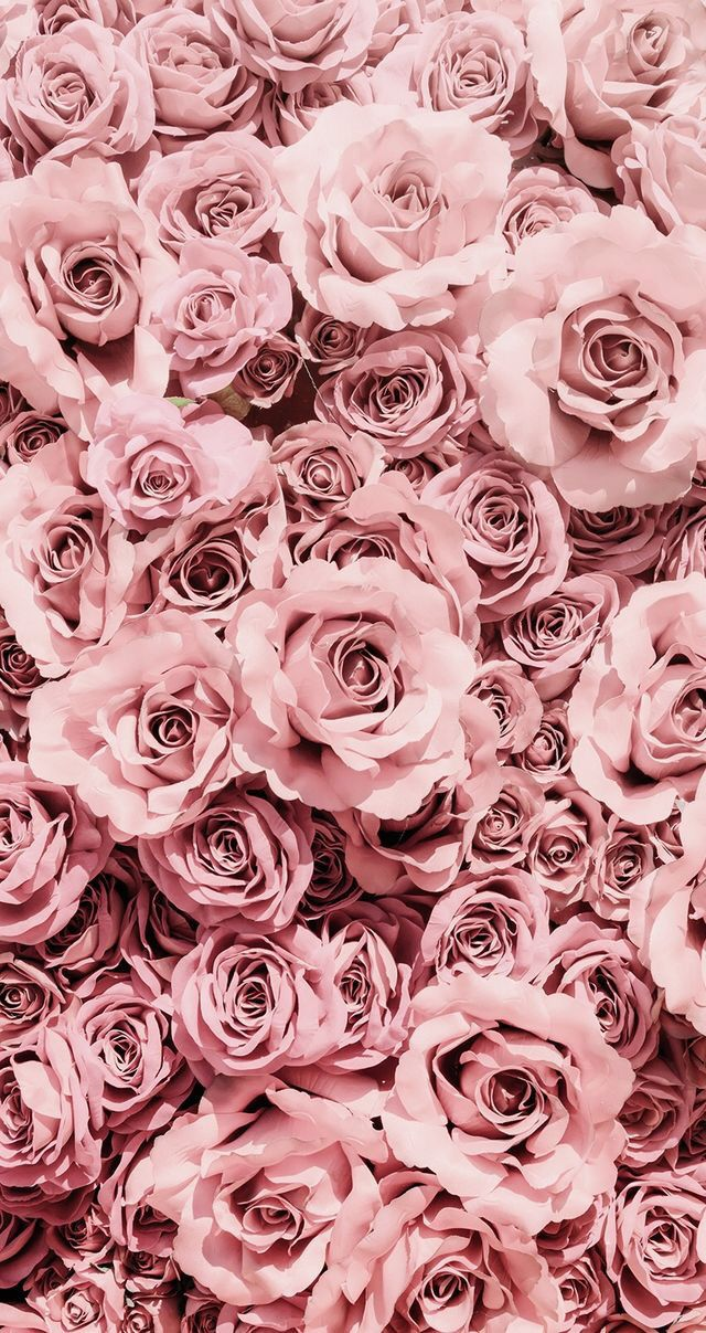 simple and aesthetic pretty pink rose flower phone wallpaper for iphone and android