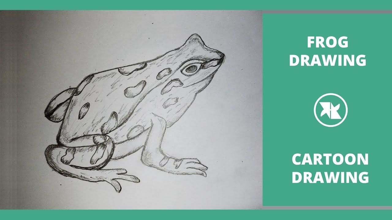 Pin By Marcia Jenkins On Art Instruction Frogs For Kids Drawing