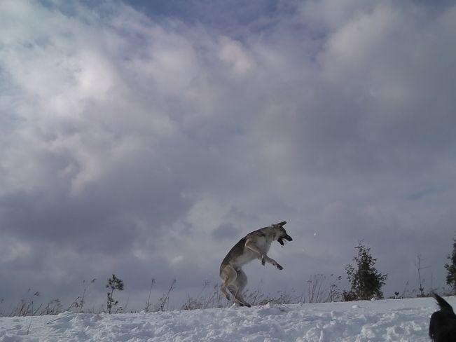 A dog's day // by Alan Bean, Orangeville, ON