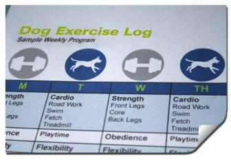DogLog_Exercise-Guidelines