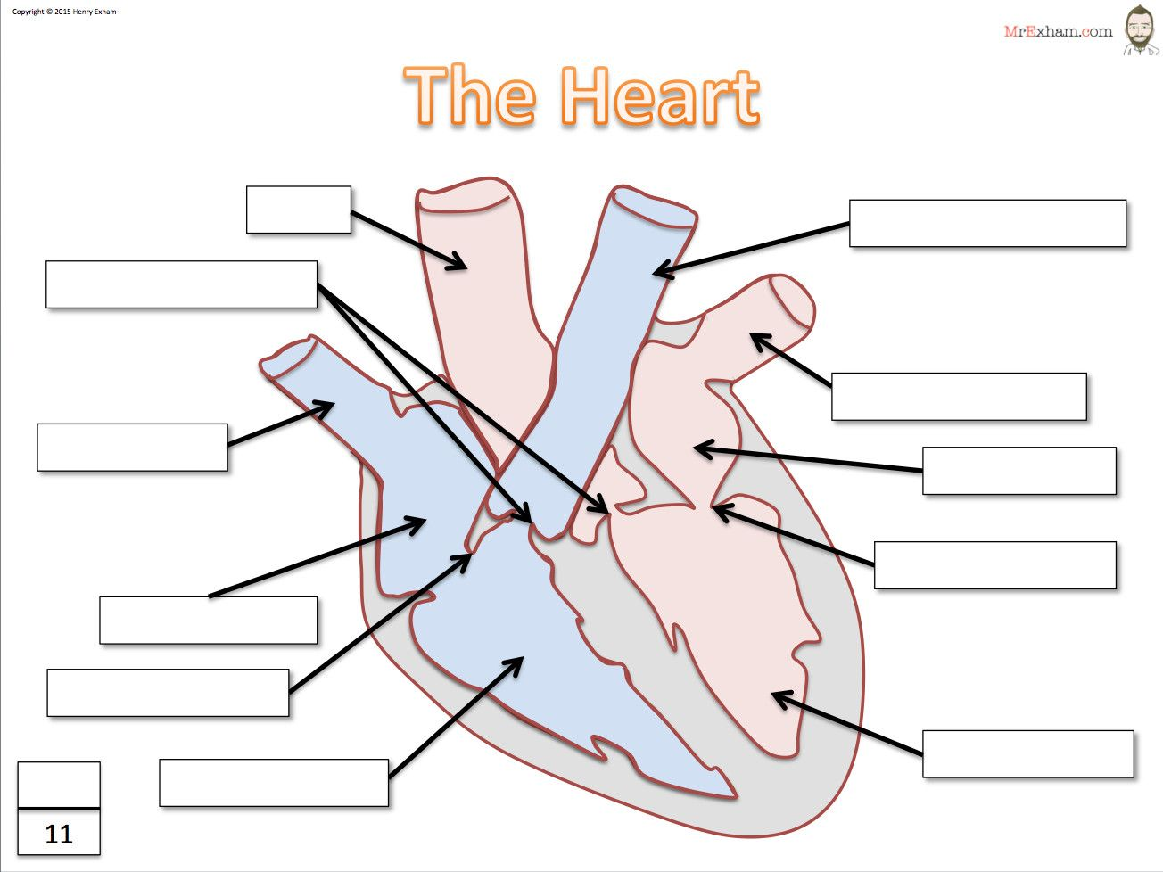 Labeling Diagrams Of the Heart Beautiful Mr Exham in 2020 ...
