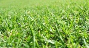 Homemade Lawn Fertilizer Recipes Lawn Fertilizer Lawn Lawn Care