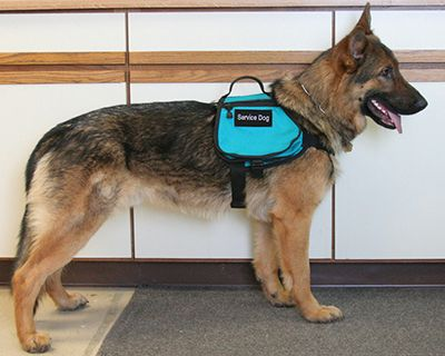 Assistance Dog Saddle Bag Vest
