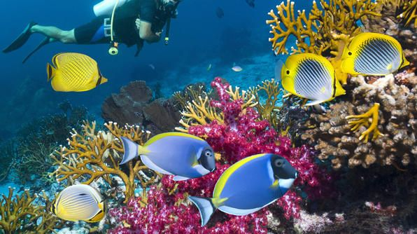 Travel Channel Article: Best Diving and Snorkeling in Belize