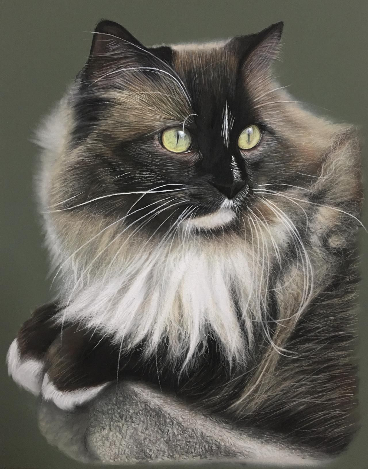 Chip The Ragamuffin Cat By Ivanhooart On Deviantart Ragamuffin Cat Cats Ragamuffin