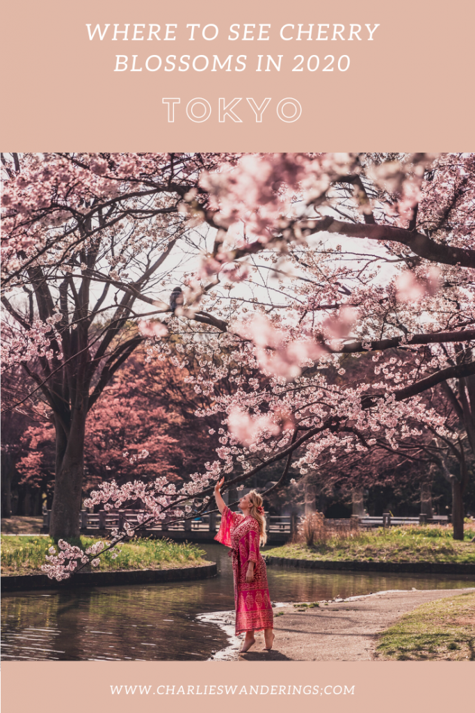 The Best Cherry Blossom Locations In Tokyo Charlies Wanderings In 2020 Cherry Blossom Blossom Garden Bonsai Tree