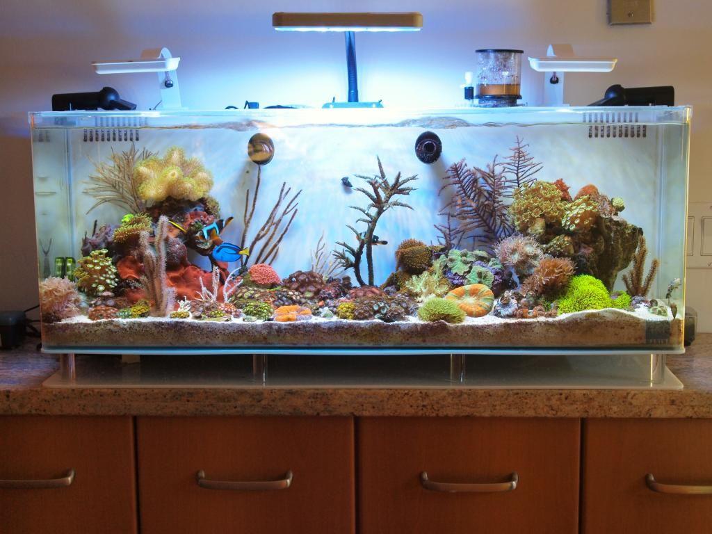 Prix aquarium 974 for Aquarium prix