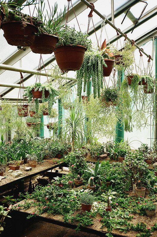 stunning interesting plants with hangende kruidentuin with koopzondag xxl nordhorn. Black Bedroom Furniture Sets. Home Design Ideas