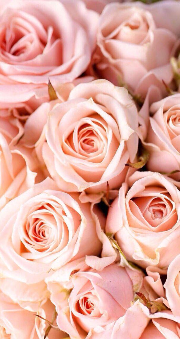 Rose Wallpaper Iphone Wallpapers Sfondi Rosa Sfondi Per Iphone