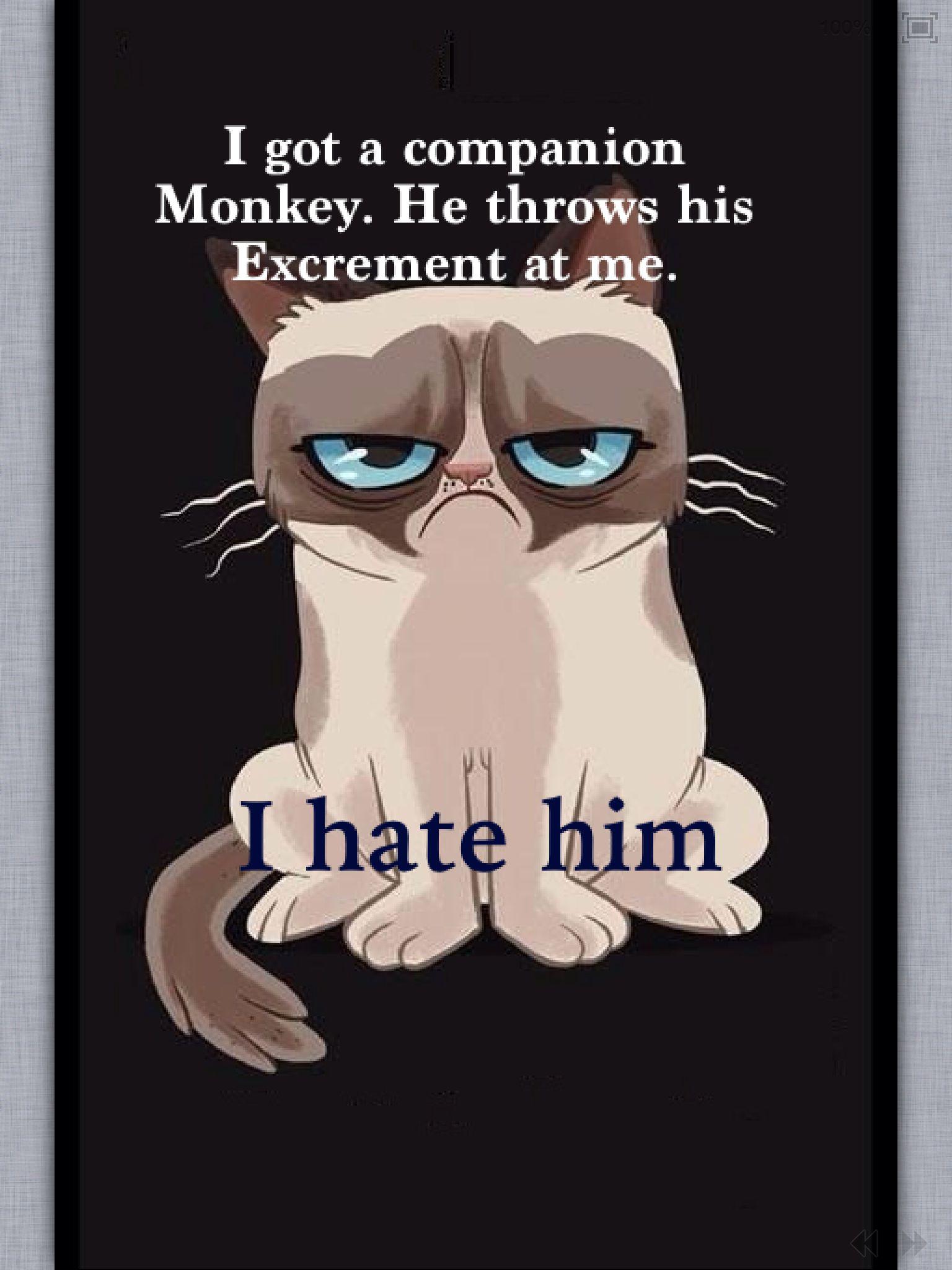 Grumpy cat hates monkeys. monkey, cat, grumpy cat,