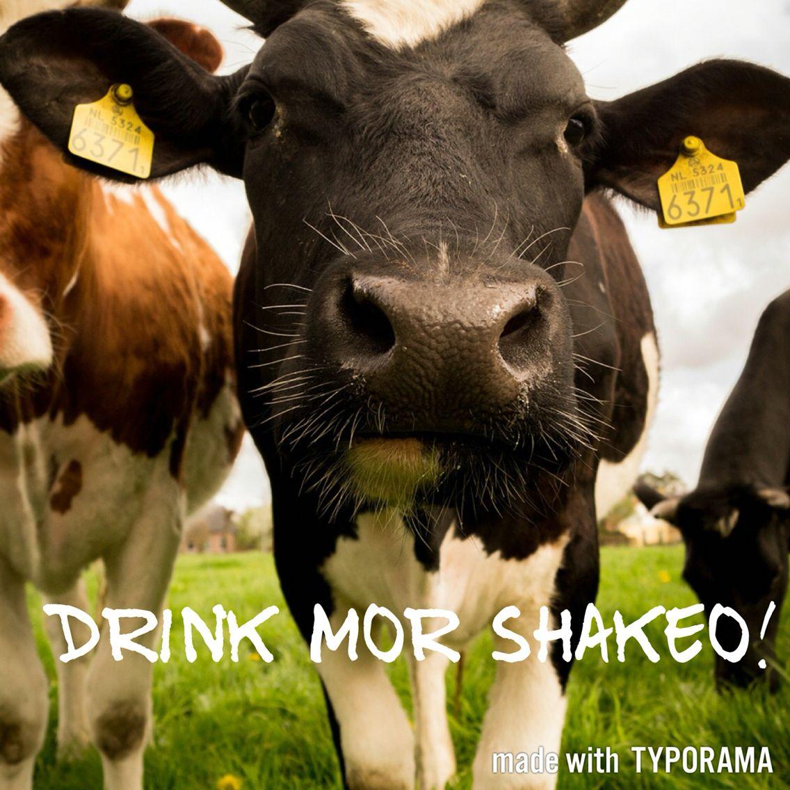 Pin by Whitney Bretana on Quotes Cow photos, Cow