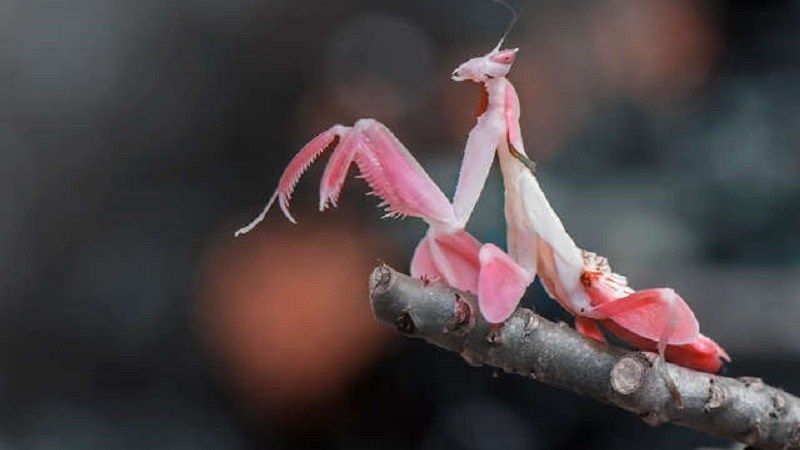 This Incredible Bug Looks Just Like A Flower Video Cool Insects Most Beautiful Animals Animals Beautiful