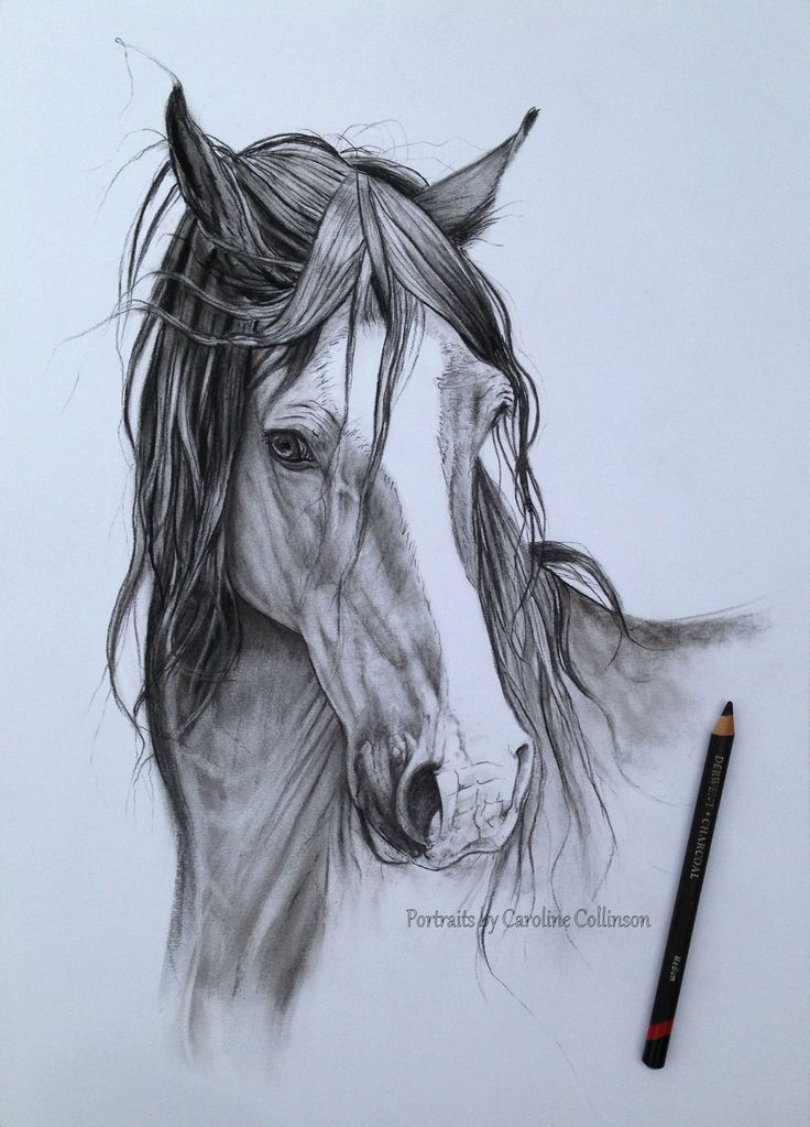 Image Result For Amazing Horse Drawing Horse Drawing And Panting