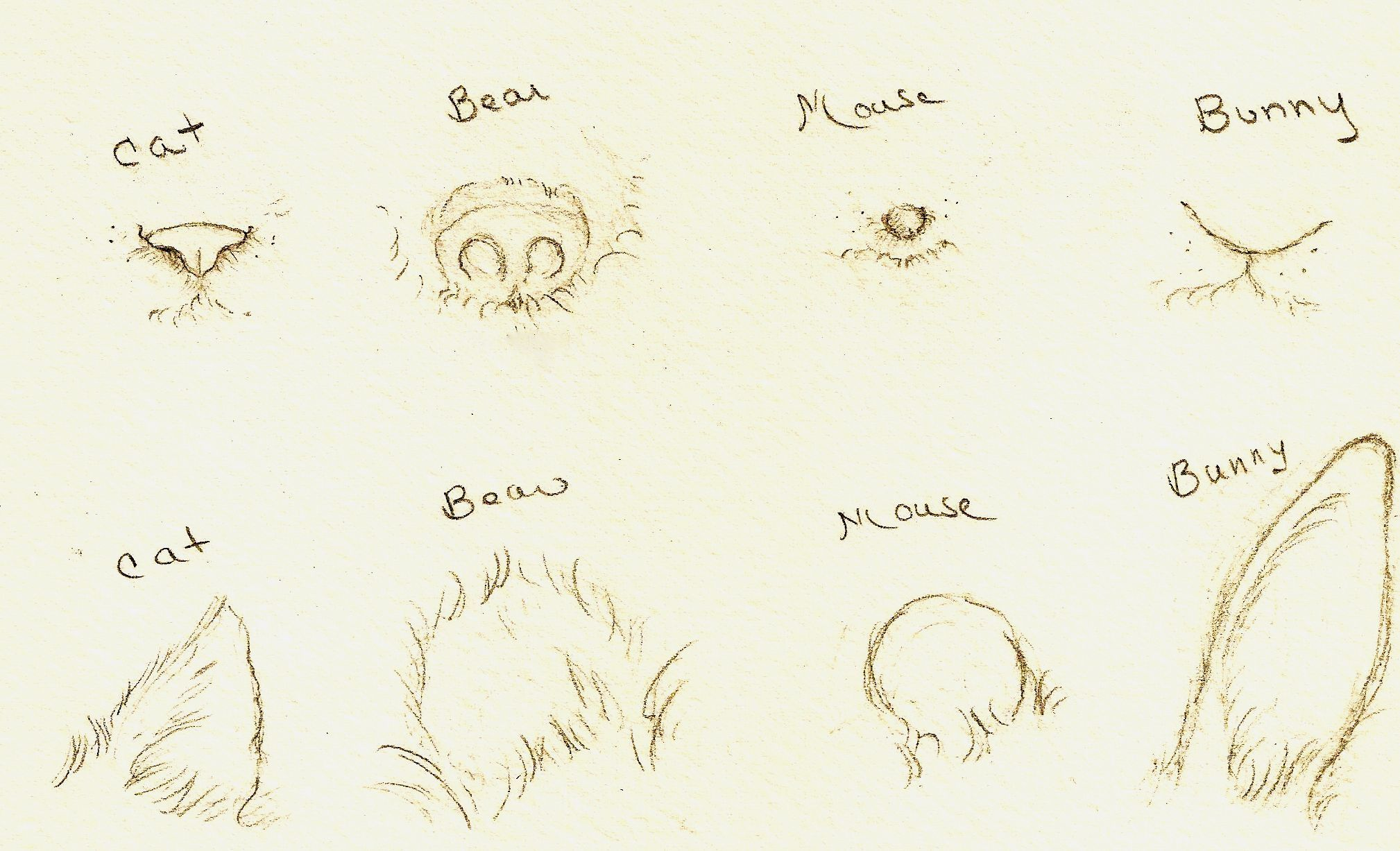 Sweet Animal Drawings How To Draw Animal Faces With