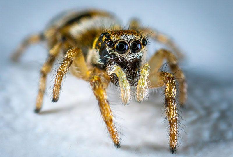 6e744731c4a6773f684f0fcf3d5271dc - How To Get Rid Of Spiders In Side Mirror
