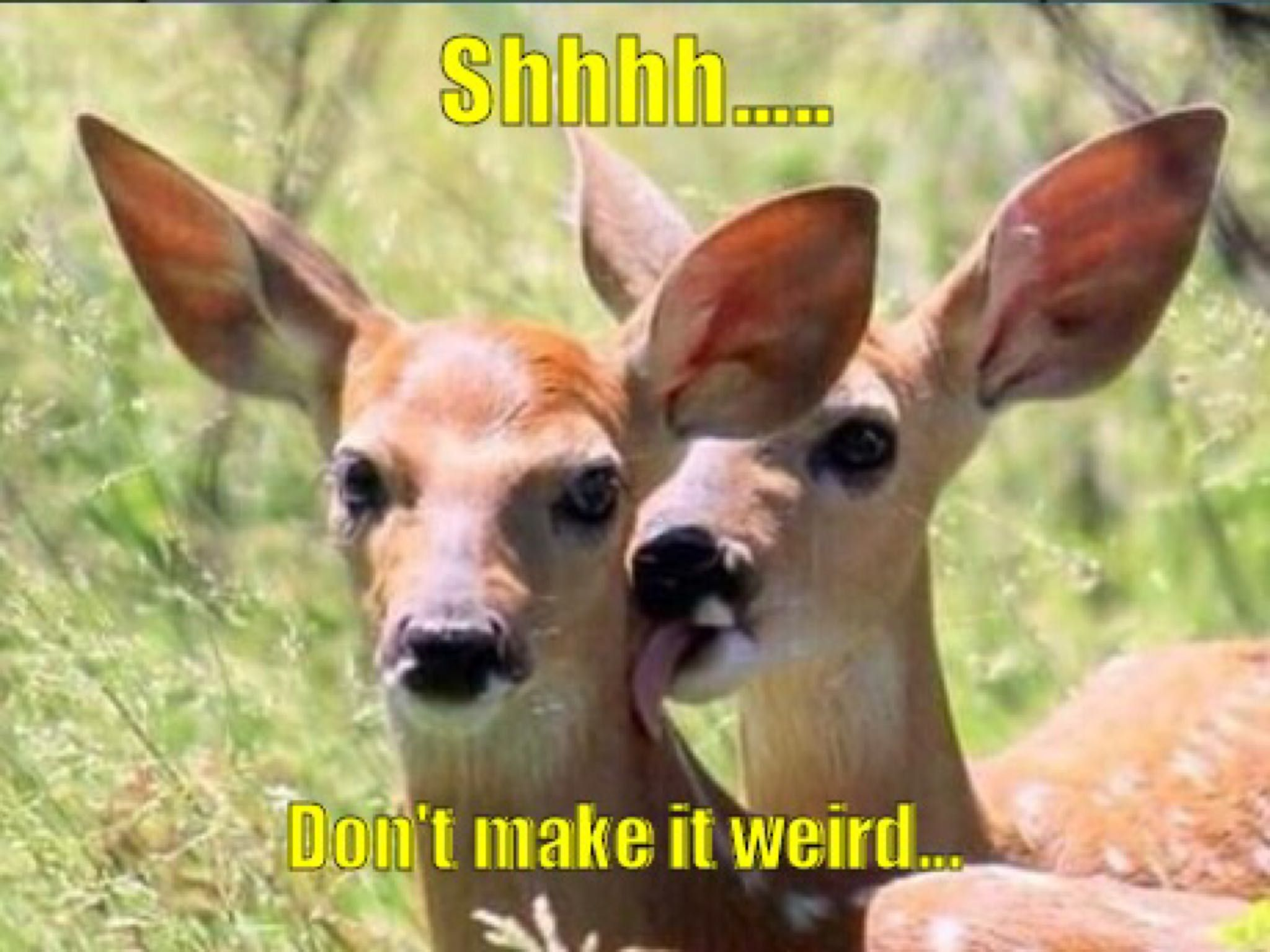 Hush now... #funny #funnyPicture #FunnyText #funnyVideo #funnyPost #funnyQuotes #FunnyStuff #FunnyAnimals #funnyJokes #FunnyThings #FunnyDogs #FunnyCats #FunnyKids #FunnyPeople #Funnypranks