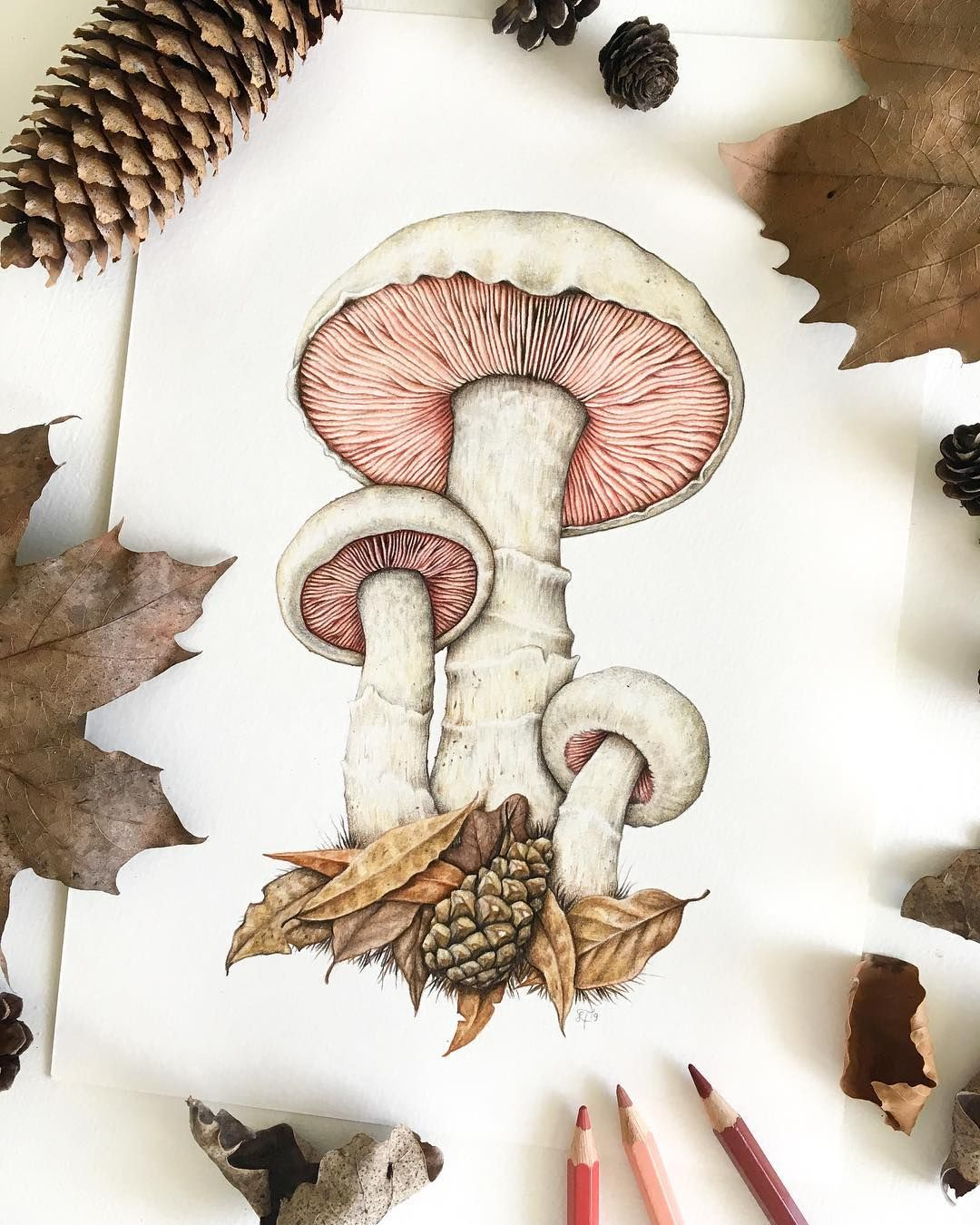 "Wild Fauna Art on Instagram: ""Some wee field mushrooms ..."