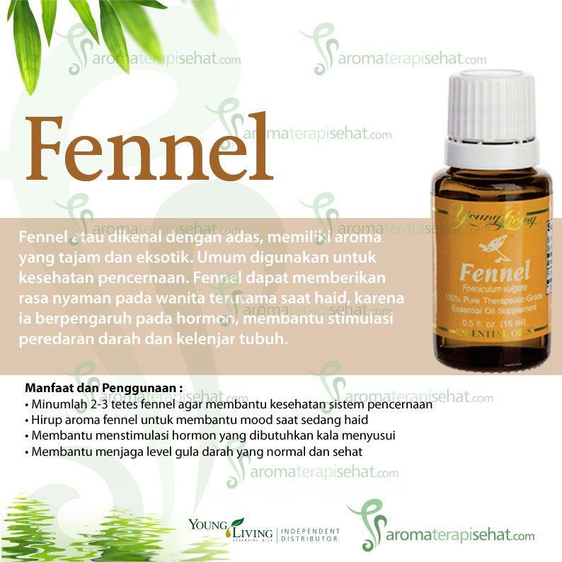 Fennel Fennel Essential Oil Pinterest Fennel Fennel