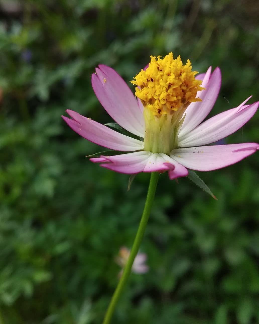 Pin Oleh Yuli Astutik Di Yang Saya Simpan Bunga Daun Taoge