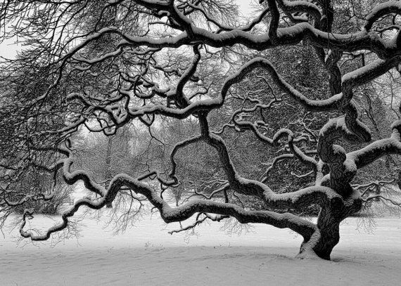 Custom listing set of 5 prints nature photography winter tree landscape snow japanese maple tree black and white 4x6