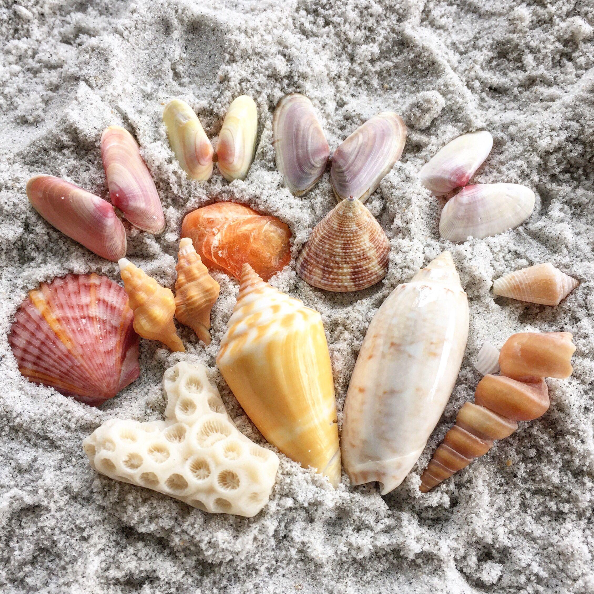 Tiny Lovelies Barefoot Beach Bonita Spring