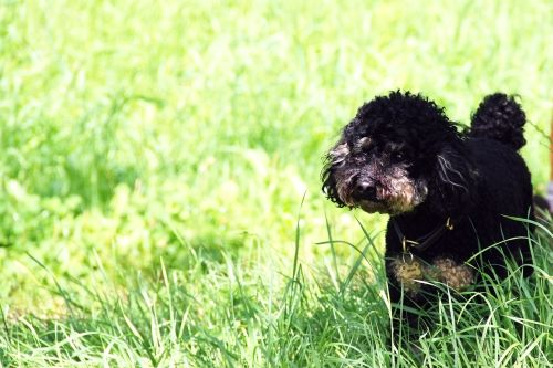 2012-08-06: poodle