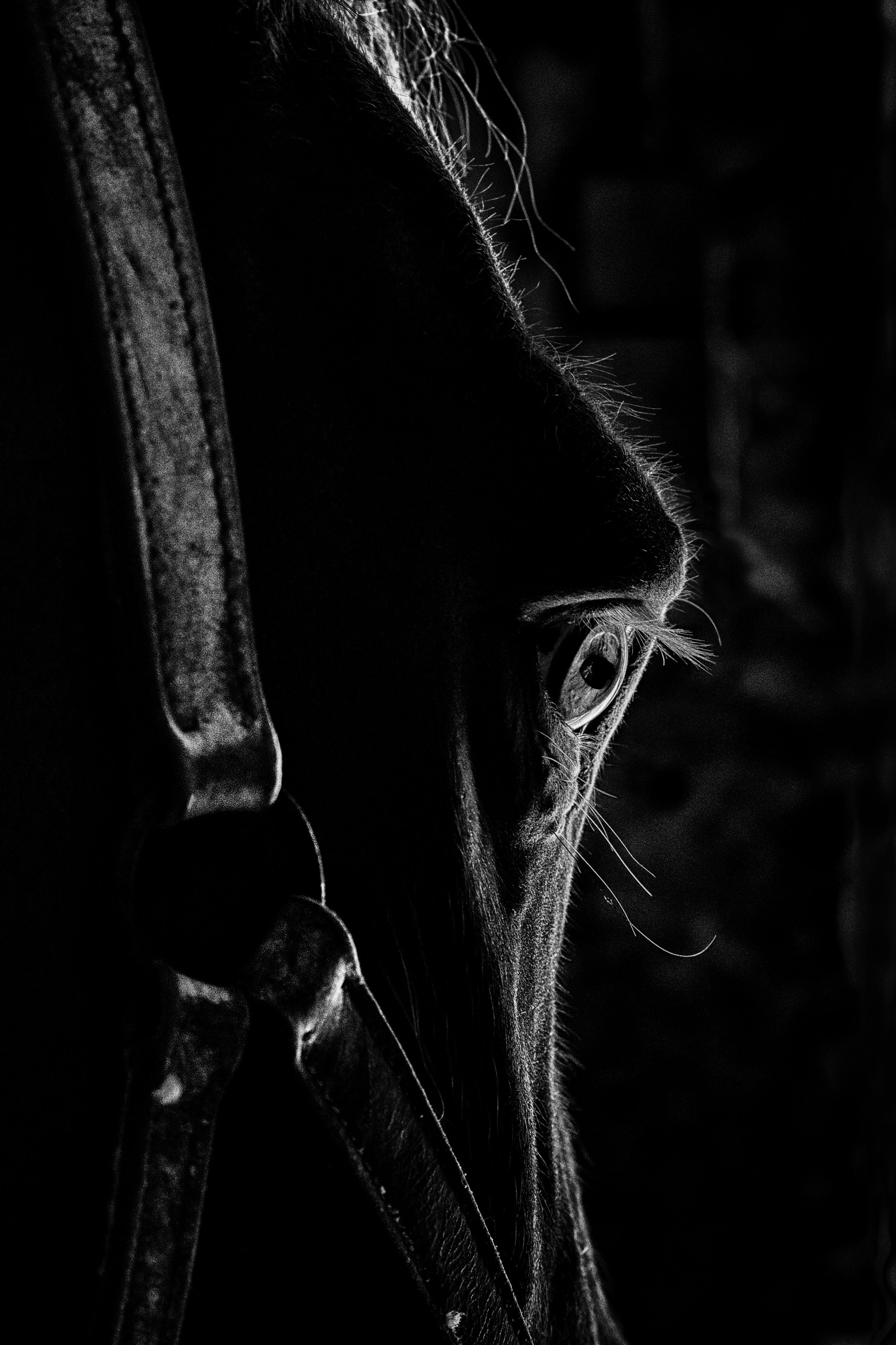Horsestoreprive Com The Private Sales Site Horse Riding Up To 70 On Top Brands Horses Equine Photographer Dark Pictures