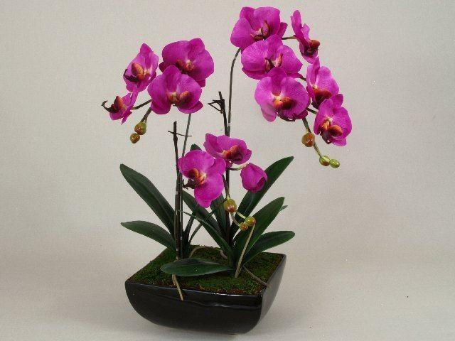 orchidee w doniczkach