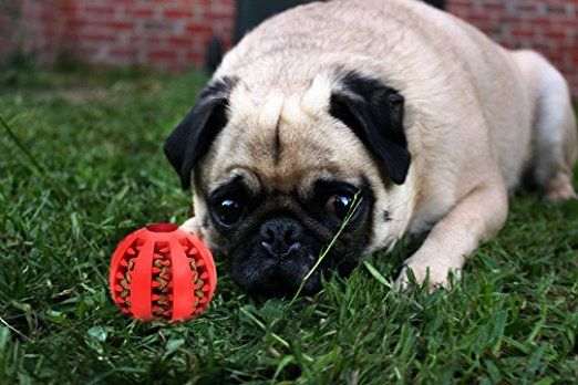 Image result for treat ball pug