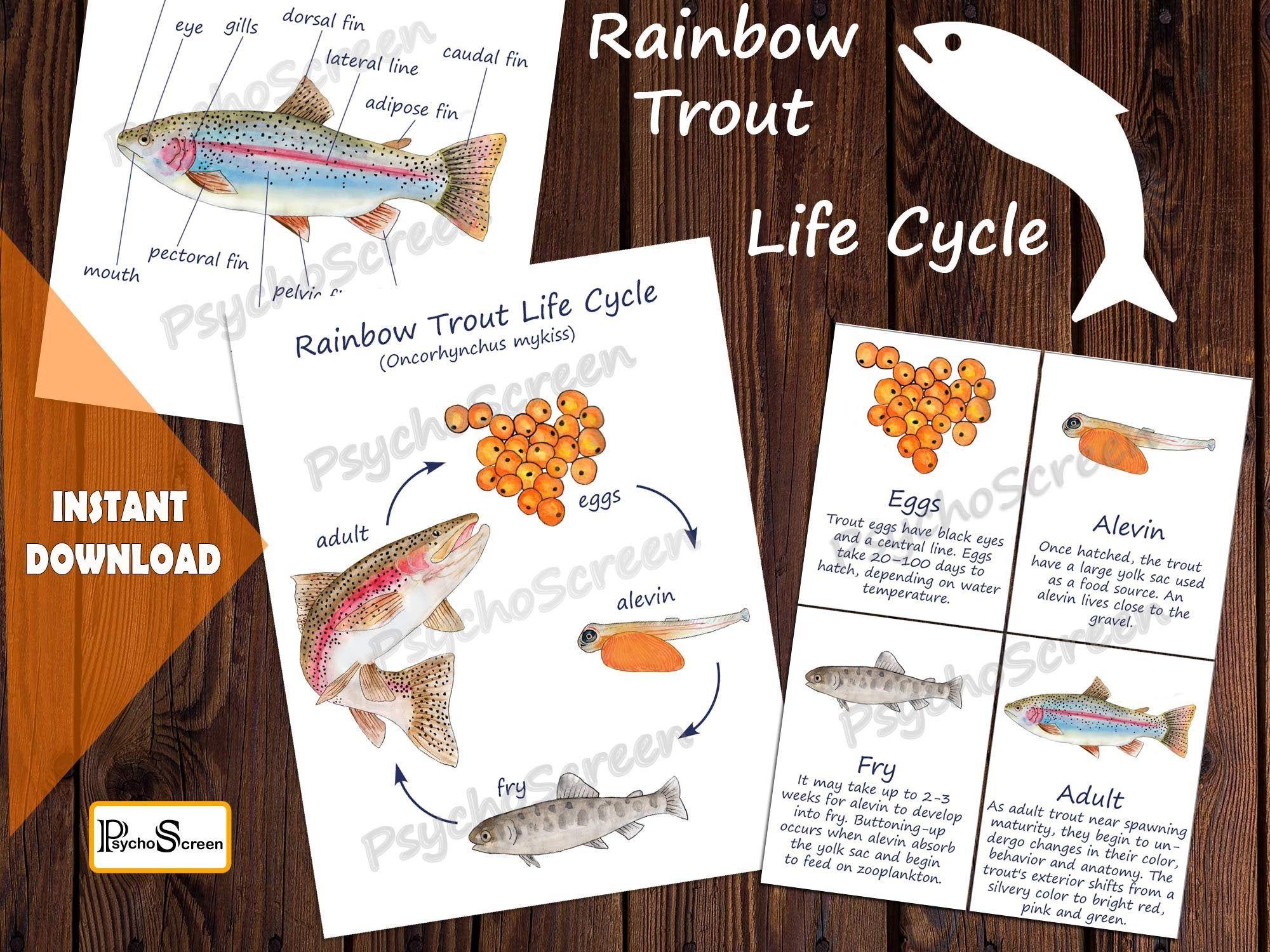 Rainbow Trout Unit Study Mega Printable Fish Bundle