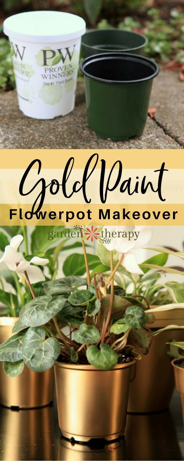 My Gilty Pleasure Gold Painted Flowerpots is part of Plastic nursery pots, Flower pots, Painted plant pots, Painted flower pots, Plastic flower pots, Diy flower pots - A little spray paint and some tips to transform plain, old terracotta or plastic pots into resplendent gold painted flower pots worthy of display