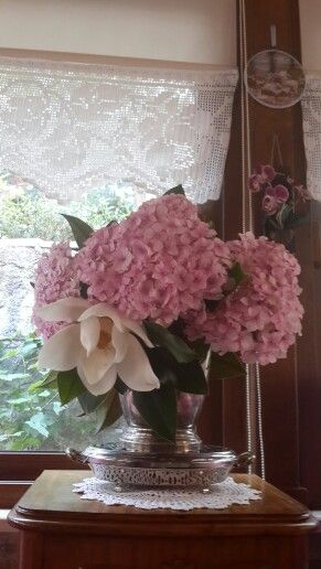 Hydrangea magnolia
