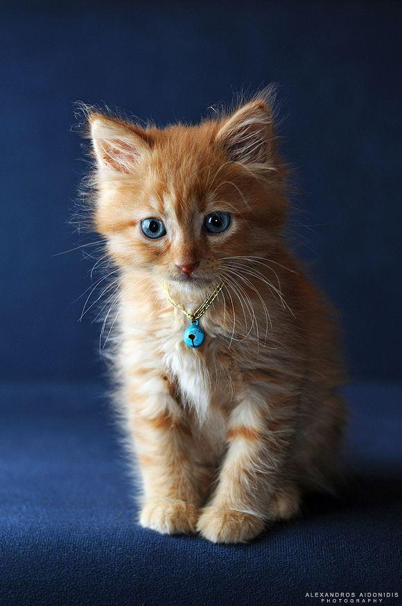 Blue Eyes Orange Kittens Orange Tabby Cats Cute Cats