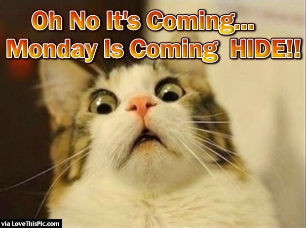 Happy Monday Meme Funny : Oh no monday is coming days monday mondays