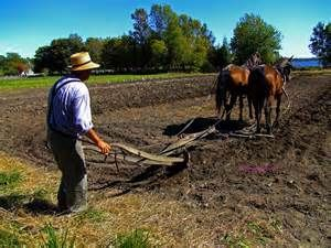 single horse plowing - Bing images