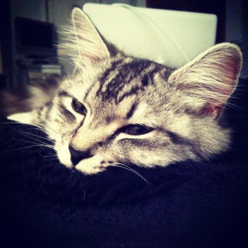 #molly #kitten #cute