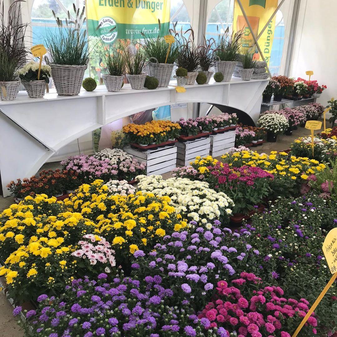 Riesen Auswahl Chrysanthemen Astern Derniederlaender Berlin Spandau Staaken Gartencenter Bunt Schon Viel Garten Ba Gartengestaltung Garten Ideen Garten
