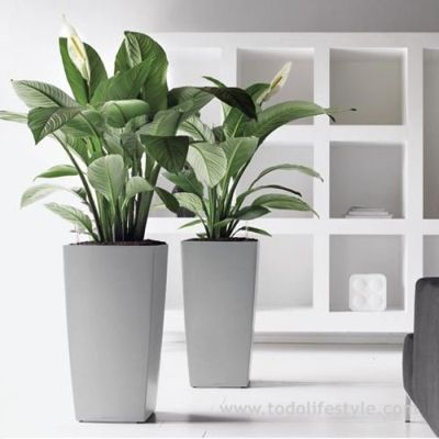 Maceta para plantas grandes plants pinterest macetas for Plantas de interior altas