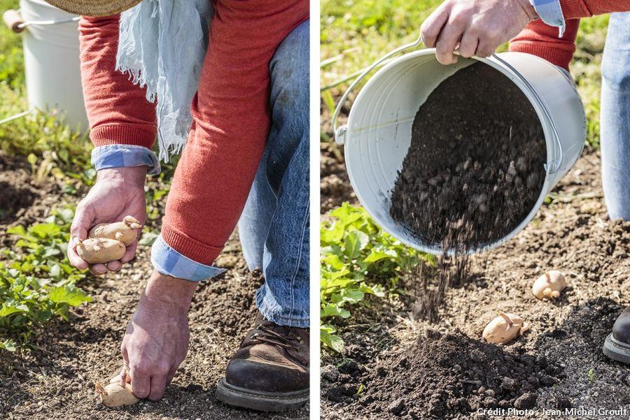 4 façons de planter des pommes de terre Cultiver des