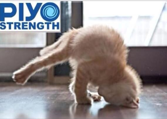 PiYo cat | Workout memes | Pinterest | Cats and Lol