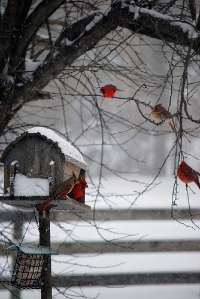 Virginia Christmas Tree Farm